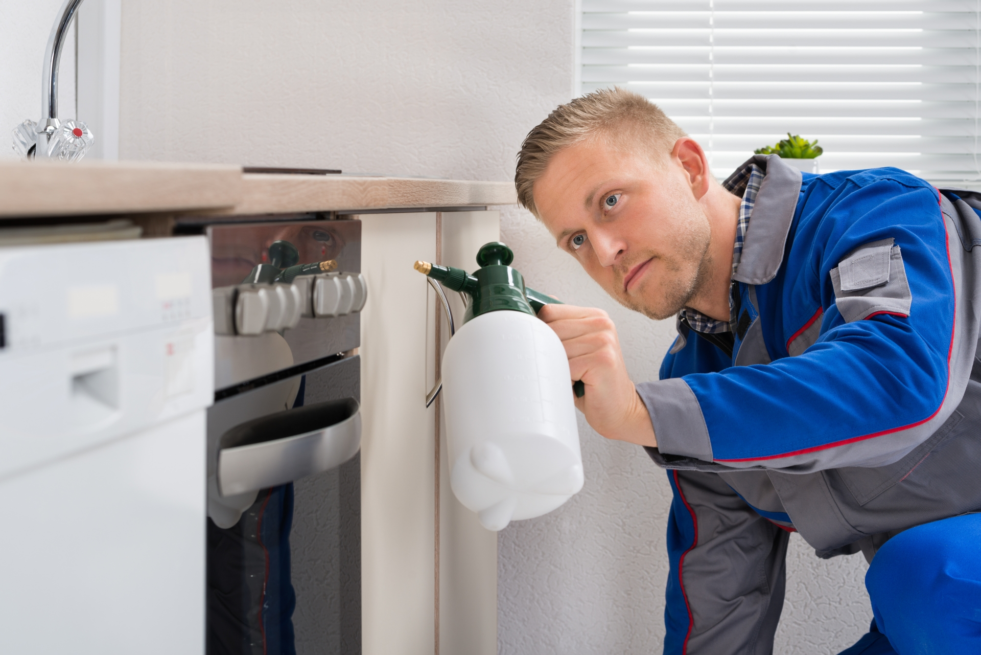 Pest Inspection, Pest Control in Woodford Green, Woodford, IG8. Call Now 020 8166 9746