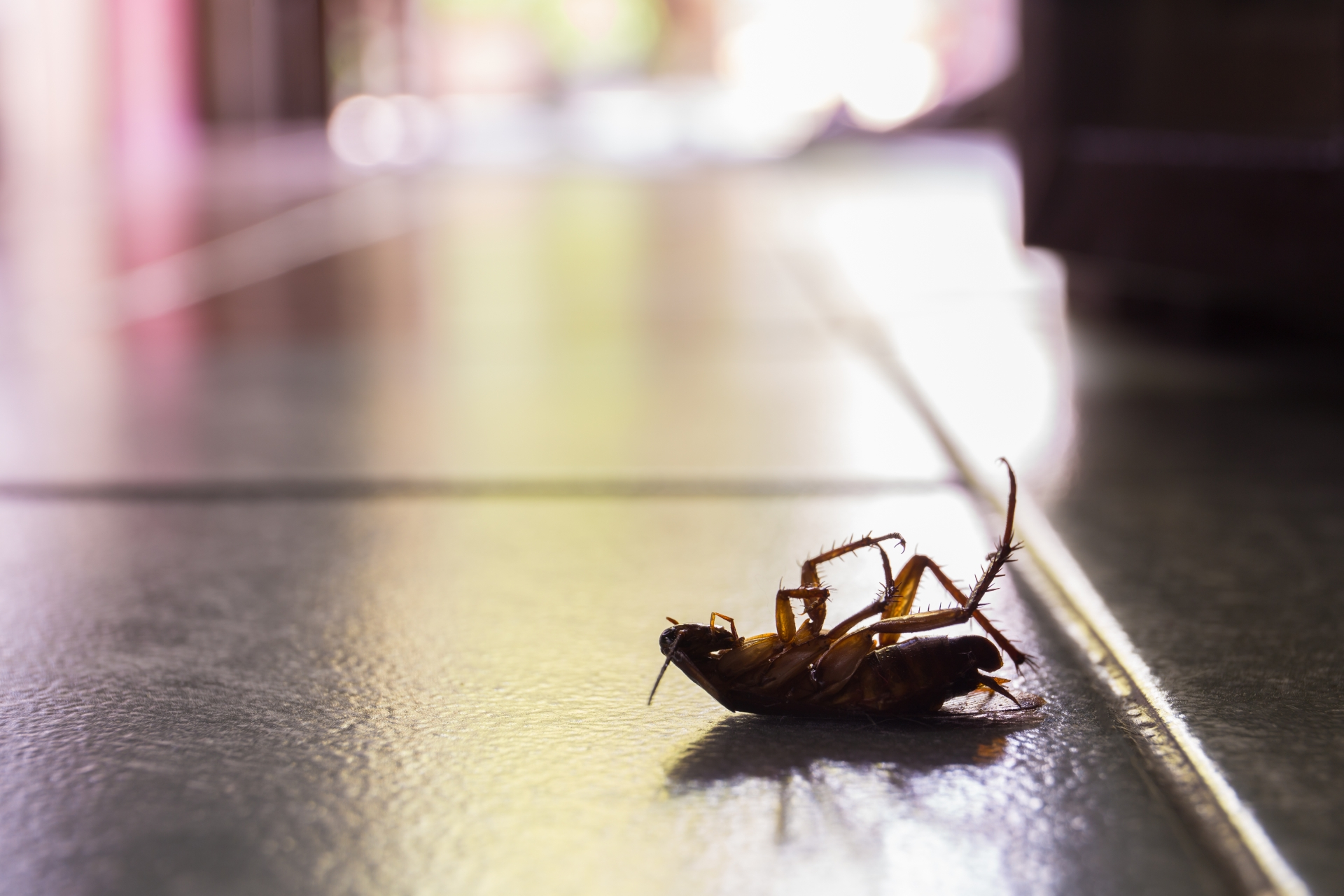 Cockroach Control, Pest Control in Woodford Green, Woodford, IG8. Call Now 020 8166 9746
